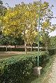 DDA 56 Bigha Park Block M Shastri Nagar Delhi.jpg