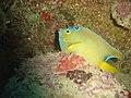 DSC00255 - peixe - Naufrágio e recifes de coral no Nilo.jpg