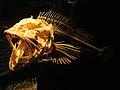 DSC26557, Monterey Bay Aquarium, California, USA (8410271422).jpg