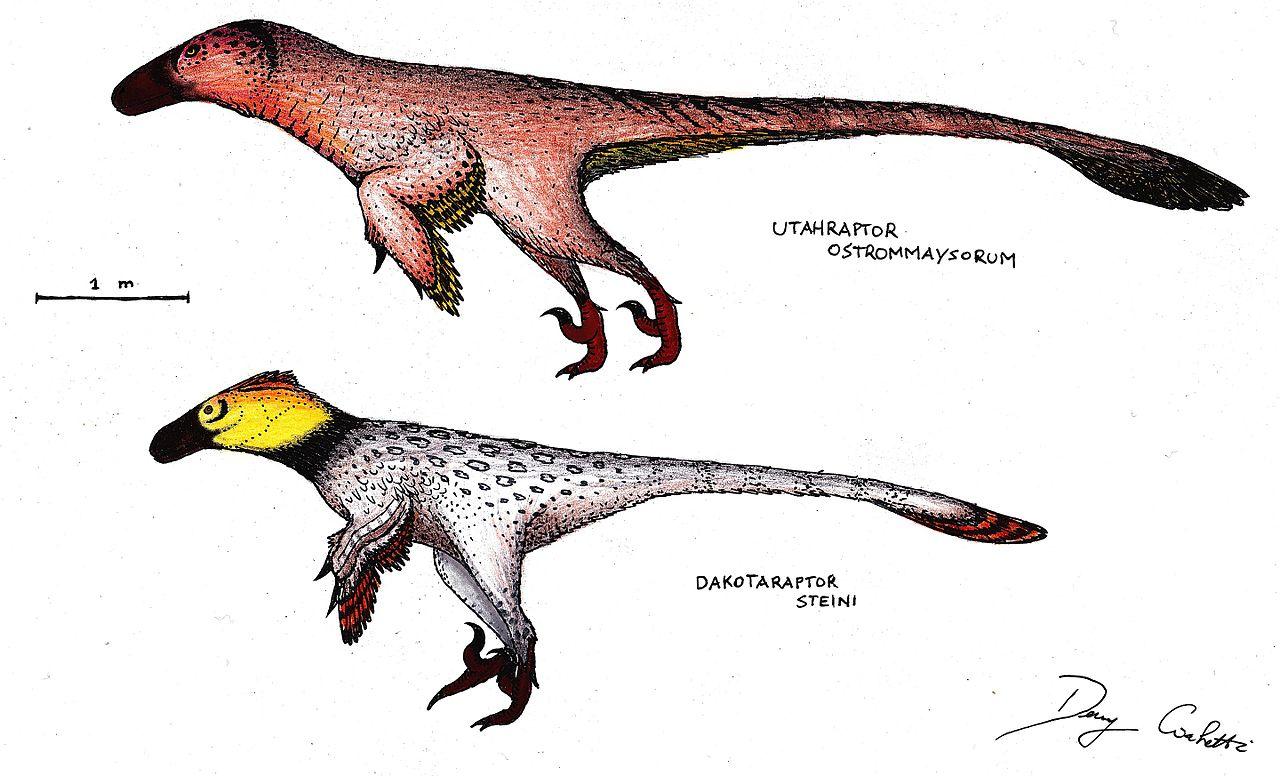 filedakotaraptor and utahraptorjpg wikimedia commons