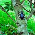 Dans les bois du Jardin de l'Université d'Abomey Calavi.jpg
