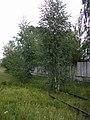 Daugavgrīva, 2011 - panoramio.jpg