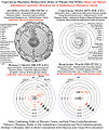 De revolutionibus-Copernicus Illustrates Heliocentric Order of Planets not Orbits.jpg