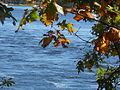Deer Island, Amesbury, Oct 2012, H.JPG