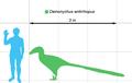 Deinonychus-scale.png