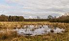 Delleboersterheide – Catspoele Natuurgebied van It Fryske Gea. Omgeving van het heideveld 015.jpg