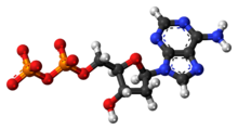Ball-and-stick model of the adenosine diphosphate anion