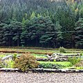 Derrybawn, Co. Wicklow, Ireland - panoramio (29).jpg