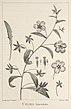 Description des plantes nouvelles et peu connues (Plate 27) (9340582053).jpg