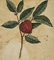 Desenho de Planta - Álbum M A B A D - Prancha 3, Acervo do Museu Paulista da USP (cropped).jpg