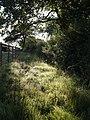 Dewy bridleway - geograph.org.uk - 514208.jpg