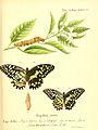 Die ausländischen Schmetterlinge in Abbildungen nach der Natur (Tab. L) (6012001607).jpg
