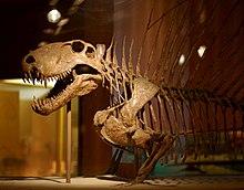 Karbonové datování fosilií dinosaurů