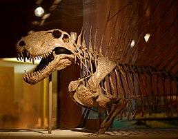 Výsledek obrázku pro dimetrodon
