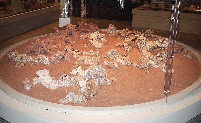 Ficheiro:Dinodontosaurus museu2x.jpg