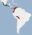 Distribution of Chiroderma salvini.PNG