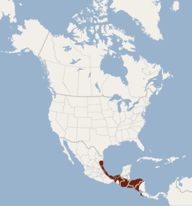 Distribution of Rhogeessa tumida.png