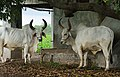 Ditala - Gujarat, India (5934004696).jpg