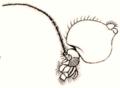 Dixa nebulosa head-thorax Curtis British Entomology 409.png