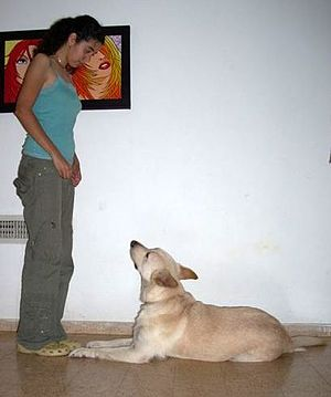 "Dog training - Dog training using positive reinforcement, with the dog exhibiting the ""down"" position"