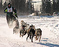 Dogsled racing Alaska.jpg