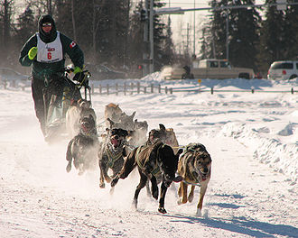 Anthrozoology - Man(left)'s best friend: dogsled racing in Alaska