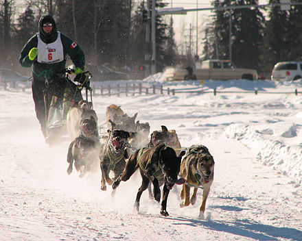 Man's best friend: dogsled racing in Alaska Dogsled racing Alaska.jpg