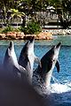 Dolphin Cove 18.jpg