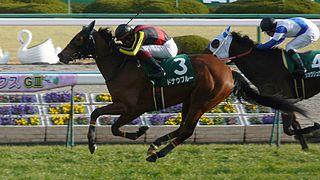 Kyoto Himba Stakes