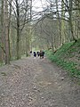 Downhill path, Stub House Plantation - geograph.org.uk - 154098.jpg
