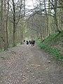 Downhill path, Stub House Plantation - geograph.org.uk - 154098.jpg