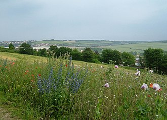 Calcareous grassland - Ranscombe Farm, Medway on the North Downs. In June, these meadows are covered with chalk grassland flowers.