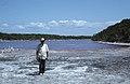 Dr Gaines, scientific director. Red Pond, Little San Salvador (38839678742).jpg