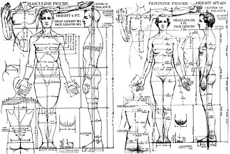 Body proportions - Image: Drawing of proportions of the male and female figure, 1936