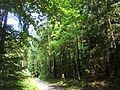 Dresdner Heide-Kannenhenkelweg 2016-022.1.jpg