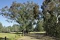 Dubbo NSW 2830, Australia - panoramio (64).jpg