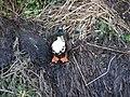 Duck on the riverbank in Framlingham - geograph.org.uk - 1125085.jpg