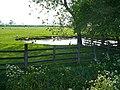Duck pond, Manor Farm - geograph.org.uk - 807615.jpg