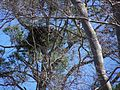Eagle Nest (6053190011).jpg