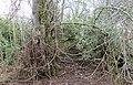 Earth mound, Ballochmyle House ice house, Mauchline, East Ayrshire.jpg