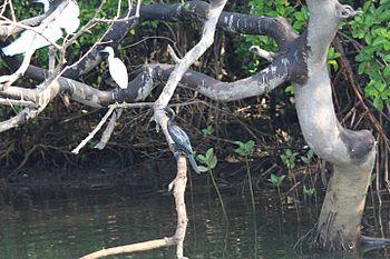 Egret and Cormorarnt.jpg