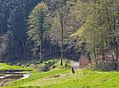 Eifgenbachtal hiking trail.jpg