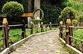 El camino entre troncos..JPG