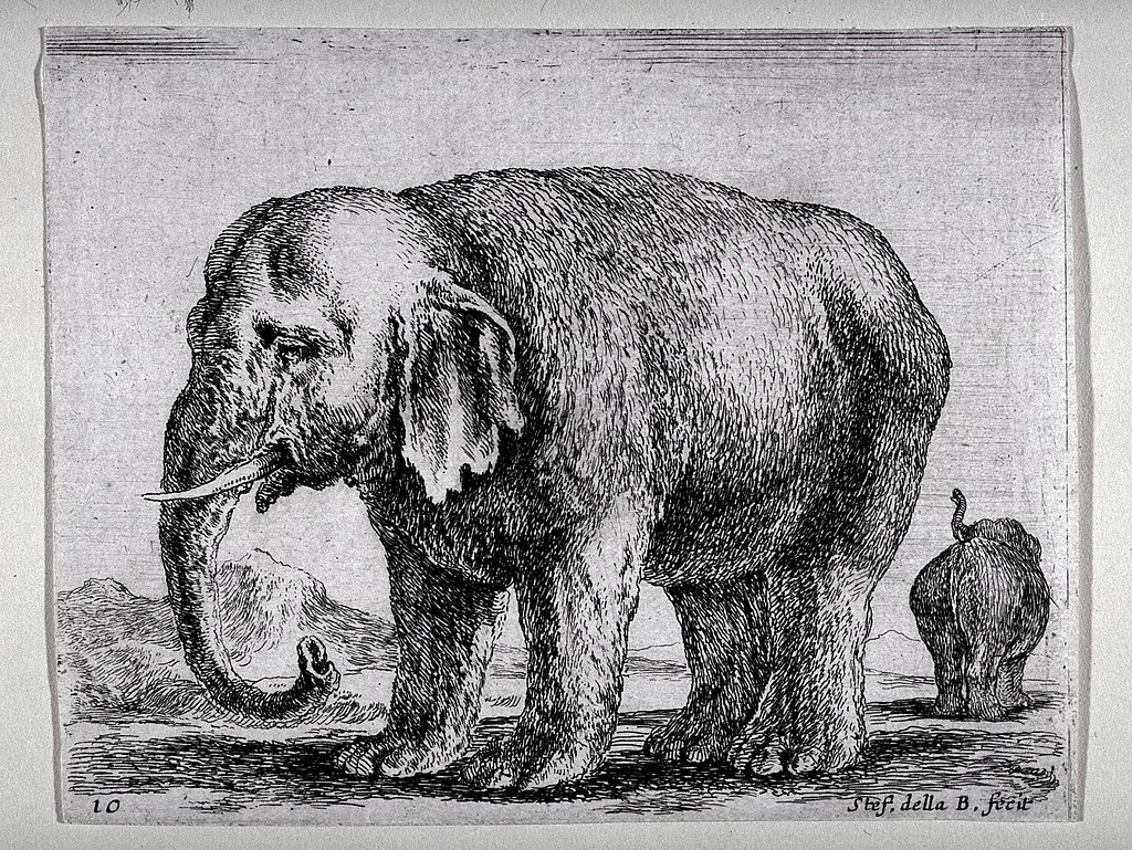 https://upload.wikimedia.org/wikipedia/commons/thumb/8/82/Elephant_%28Diversi_Animali%29.jpg/1024px-Elephant_%28Diversi_Animali%29.jpg
