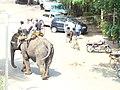 Elephant Ride in Lane G, Koreagaon park, Pune. Pic 3 - panoramio.jpg