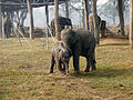 Elephant conservation.JPG