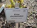 Erica crysocodon sign.JPG