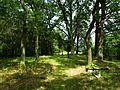 Evang. Cemetery in Niwka (Puszczykowo) (5).jpg
