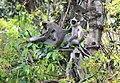 FLora and fauna of Chinnar WLS Kerala (60).jpg