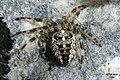 Fabulous spider (Ehrwald) (24059822124).jpg